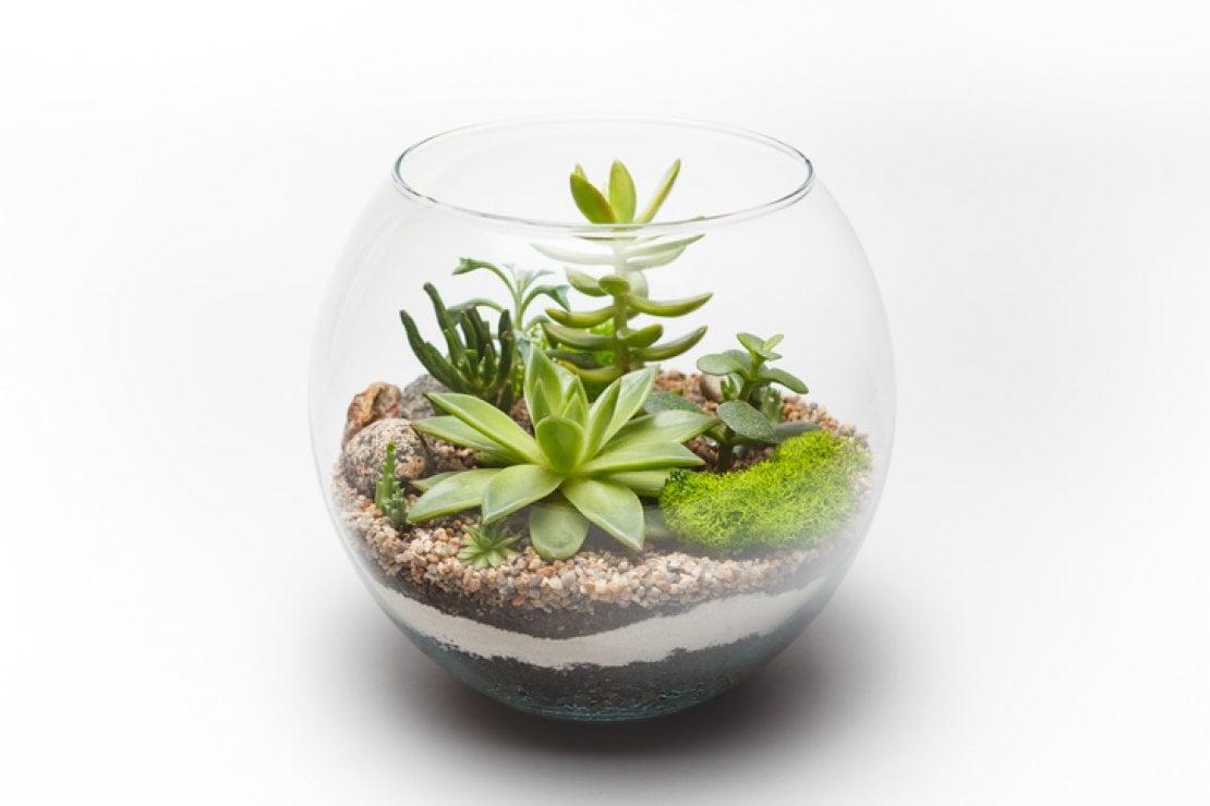 su D-La Repubblica, i regali a tema gardening, tendenza del momento